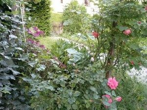 Rosen und Clematis am Eingang